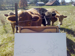 Painting with the cows